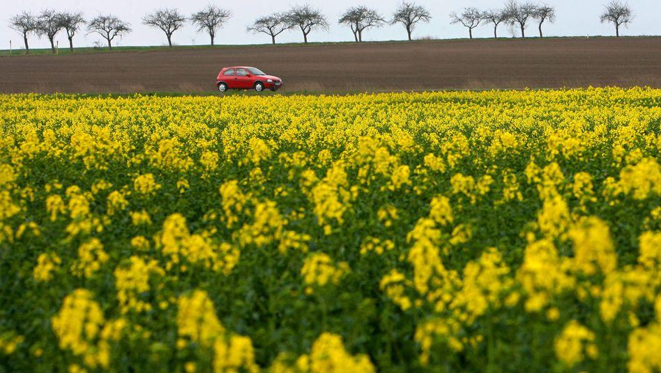 Rapsfeld: Bis 2020 sollen etwa 10 Prozent des Treibstoffs aus Biomasse produziert werden.