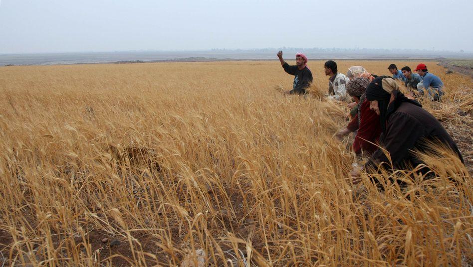 Bauern und Bäuerinnen in Syrien (Archivbild)
