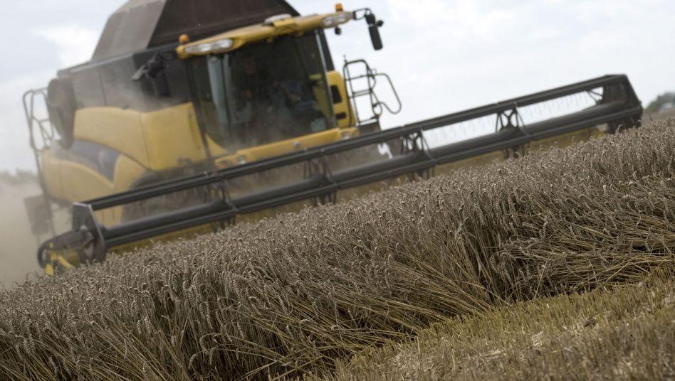 Weizenernte: Die Landwirtschaftspolitik soll umweltfreundlicher werden