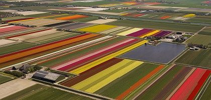 The tulip fields of the Netherlands: Europe, in all its colors