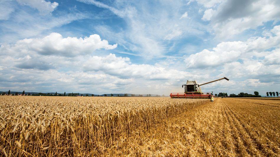 """Getreideernte in Bayern (Archivbild): """"Wir nähern uns einer guten Einigung"""""""
