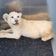 Gerettetes Löwenbaby kommt in Reptilienzoo unter