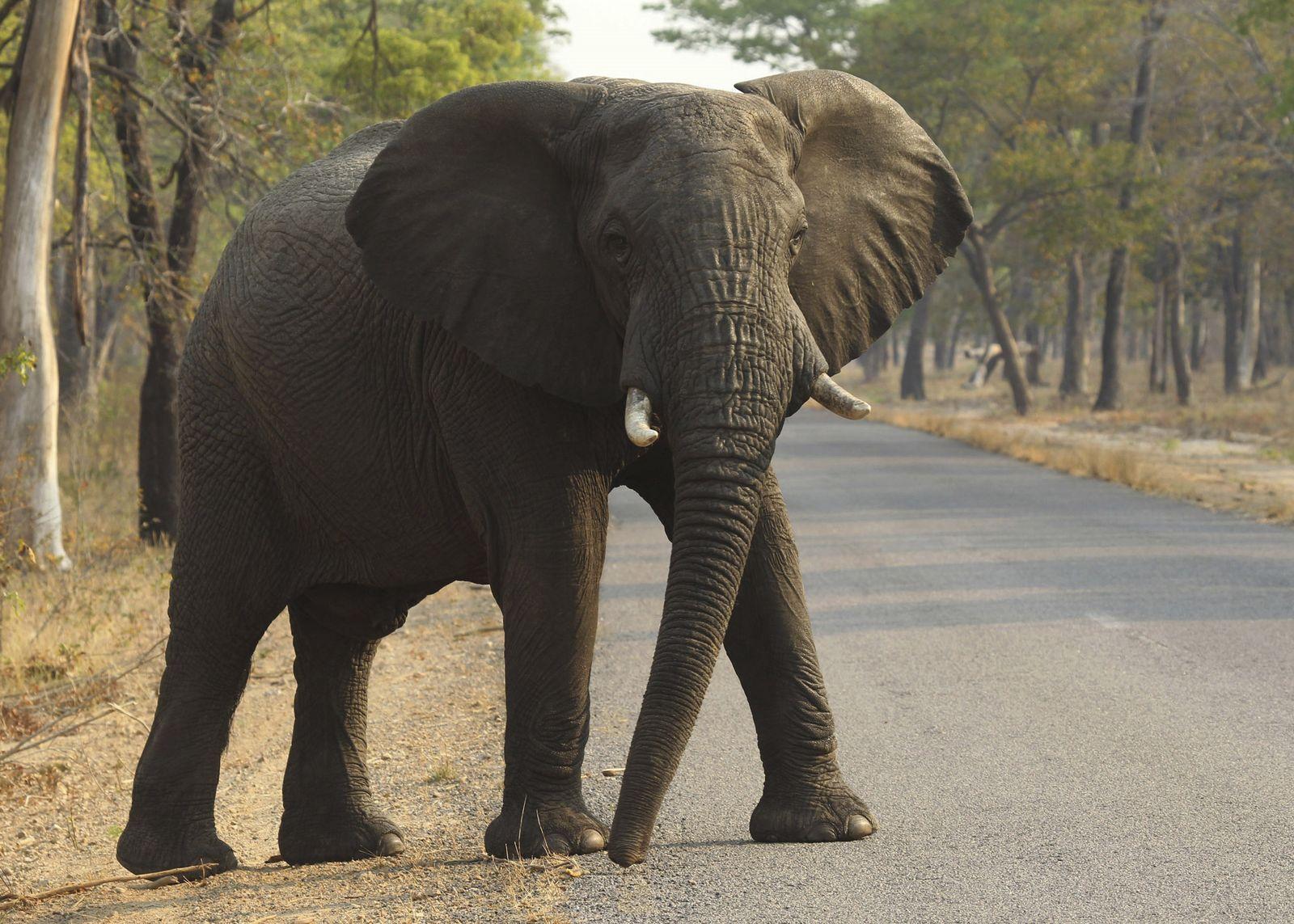 Dutzende Elefanten sterben bei Dürre in Simbabwe