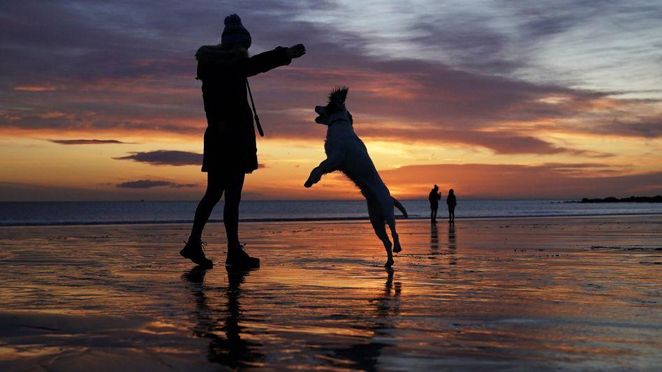 Frauchen mit Hund in Großbritannien: Ob in den Hundeprofilen auch kitschige Strandfotos vorkommen, ist nicht überliefert