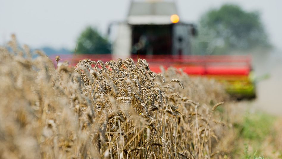 Getreideernte in Niedersachsen: Deutliches Minus durch Trockenheit