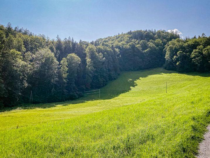 Die Senke, die Herbst und der Naturschutzbund als natürliche Barriere vorgeschlagen hatten