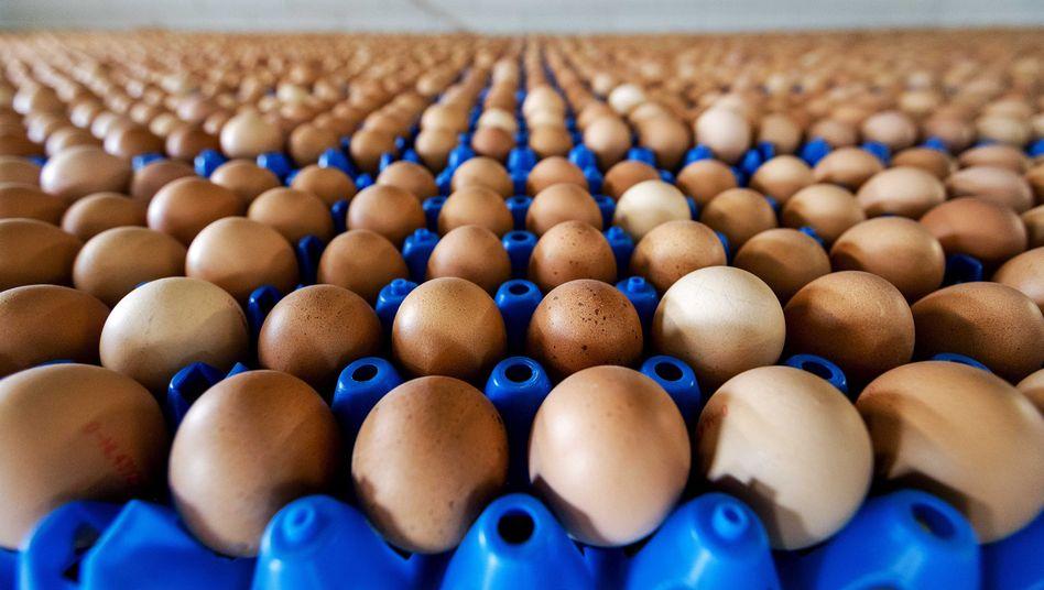 Eier aus dem niederländischen Putten