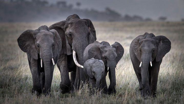 Michael Martin in der Serengeti: 48 Stunden im Tierparadies