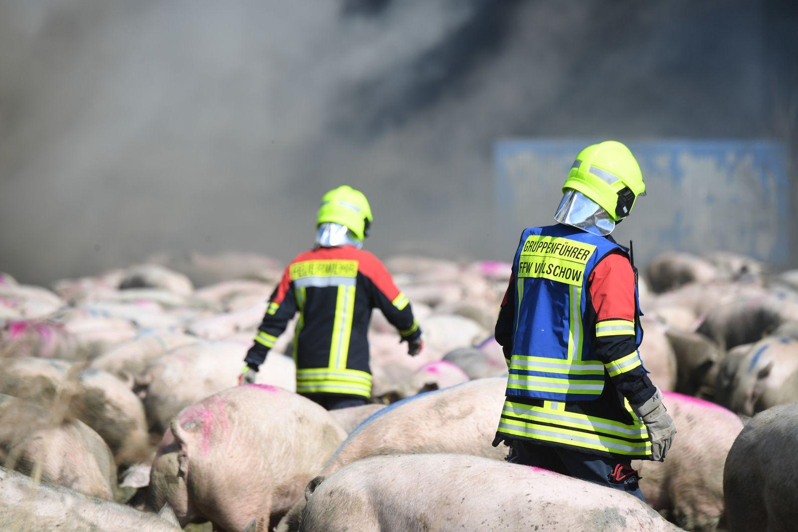 Feuer in Schweinezuchtbetrieb