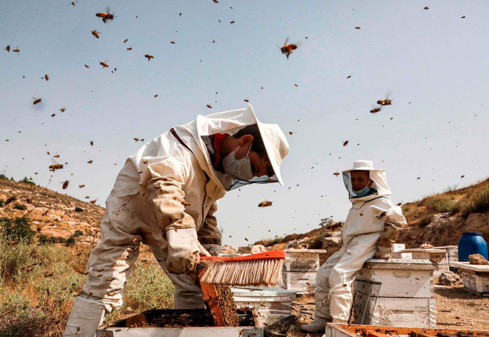TOPSHOT-PALESTINIAN-AGRICULTURE-APICULTURE-BEEKEEPING-HONEY