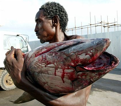 A fisherman brings his catch to port in Djibouti. Commercial fisherman from the EU are threatening fish stocks in African waters.