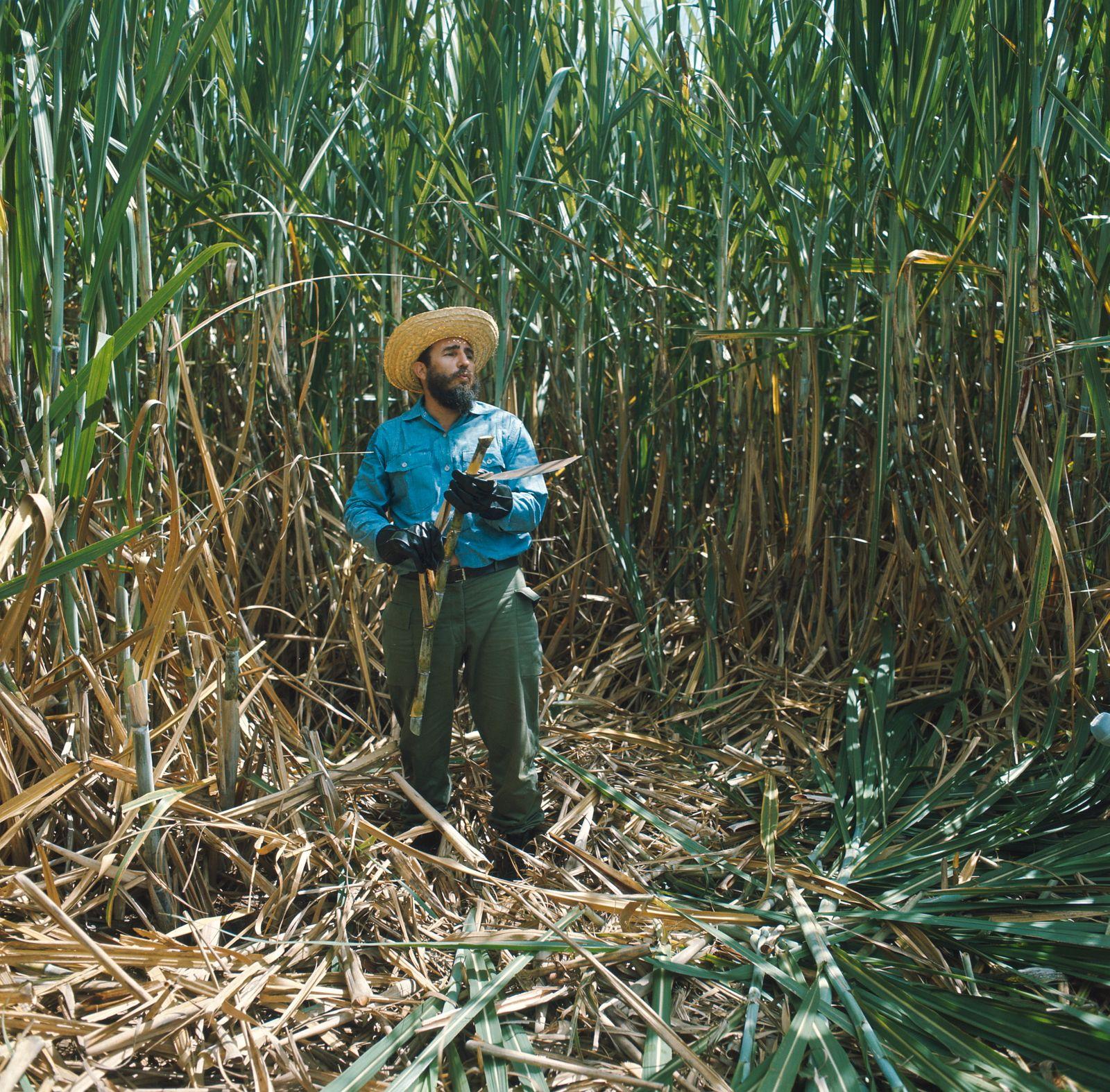 Cuba: Fidel Castro To Fight The Battle Of Sugar