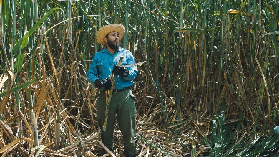 Castro bei Zuckerrohrernte