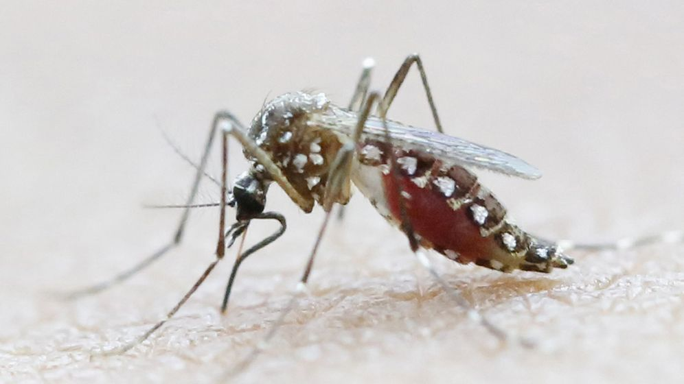 Photo Gallery: The Deadly Mosquito Invasion