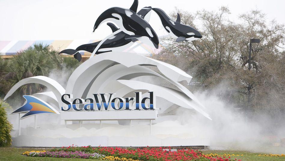Meeres-Themenpark SeaWorld: Wal-Trainerin von Orca getötet