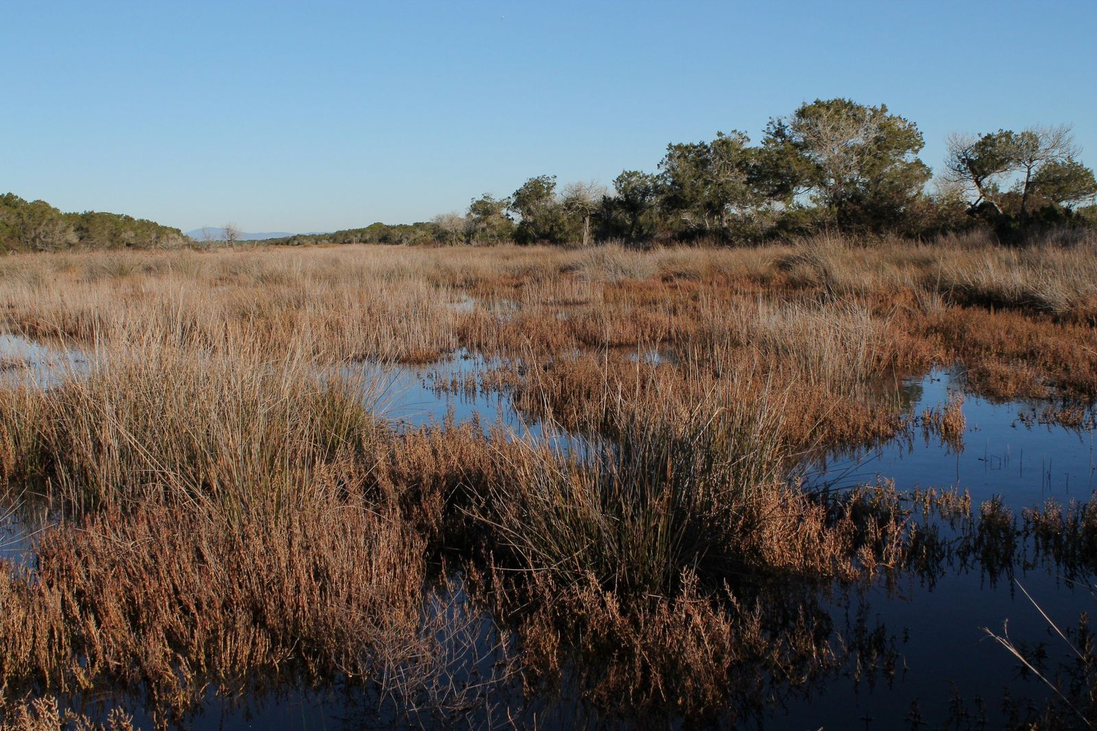 Bedrohte Feuchtgebiete - Trappola-Marschland