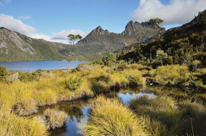 Gebirgssee am Cradle Mountain: Wer einem Tasmanischen Teufel in freier Wildbahn sehen will, könnte hier im Februar Glück haben
