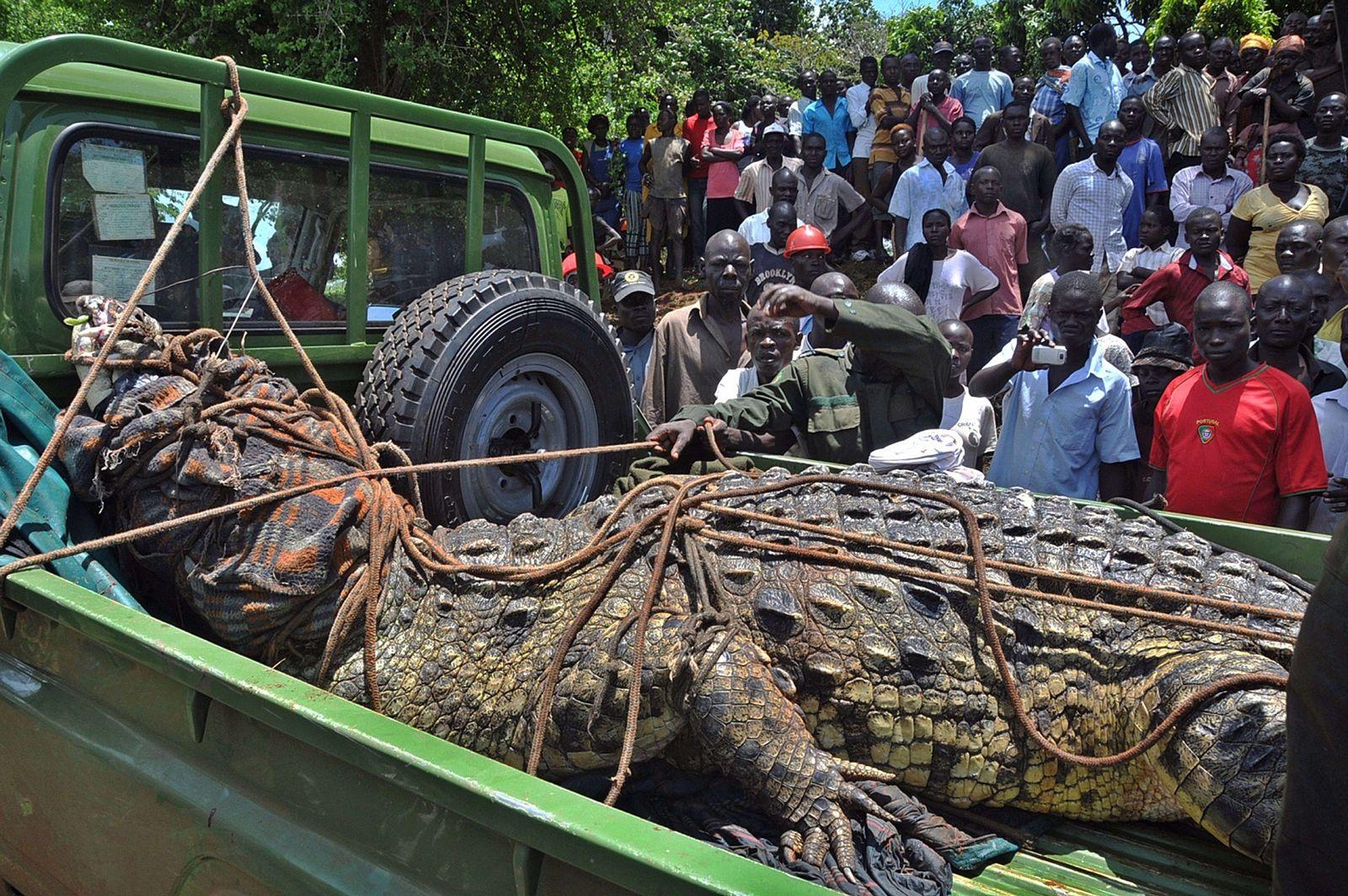 Uganda/ Krokodil
