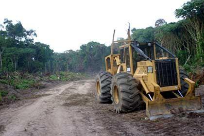 Verramschter Naturschatz: Regenwald im Kongo.