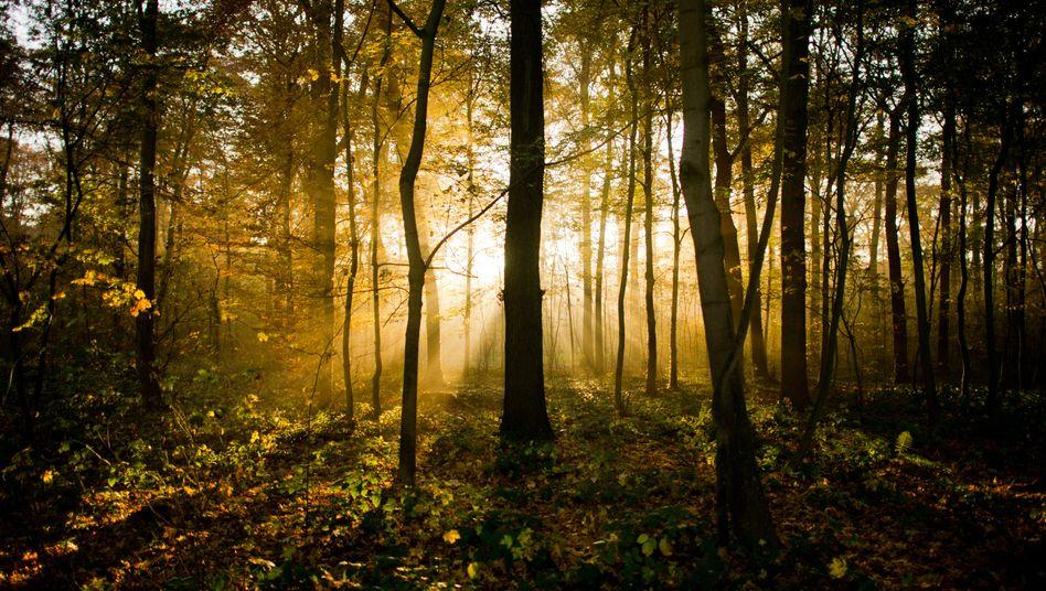 Die Jäger durchkämmten gerade den Wald, als sie den Hirsch aufschreckten (Symbolbild)