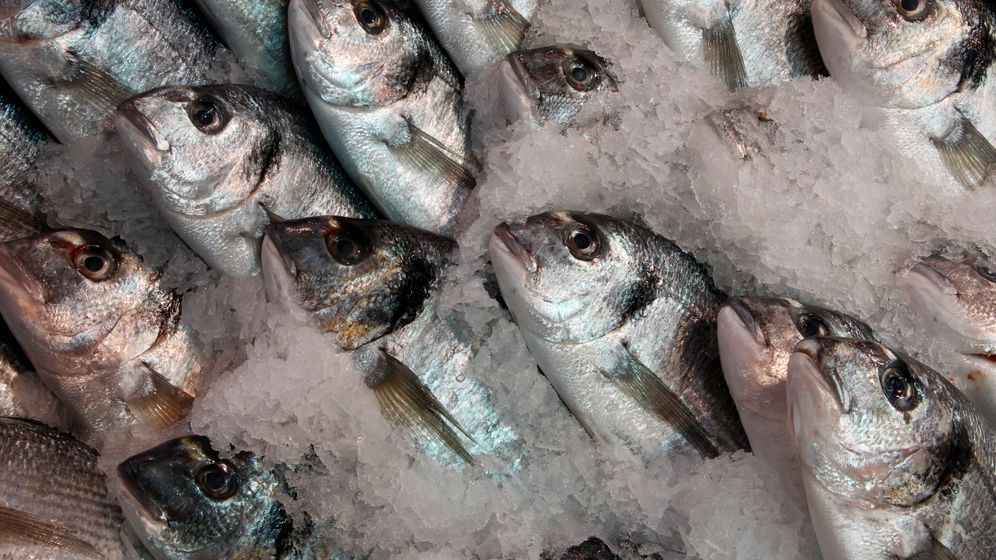 Gefahr auf dem Tisch: Worauf man beim Fischkauf achten muss