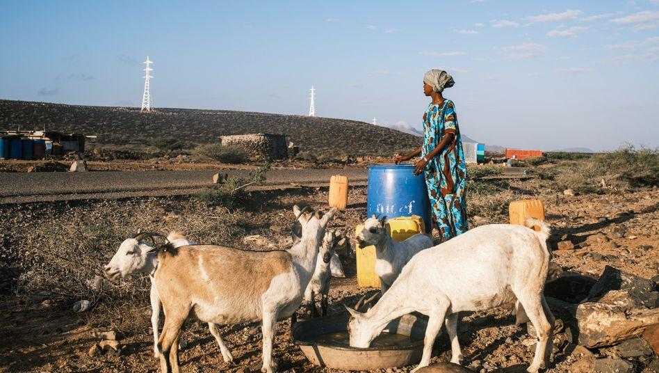 Die Familie des ehemals stolzen Nomaden Borito Ali ist an den Rand einer Verbindungsstraße gezogen – hier kommt einmal pro Woche ein Tanklaster von Unicef vorbei und bringt Wasser