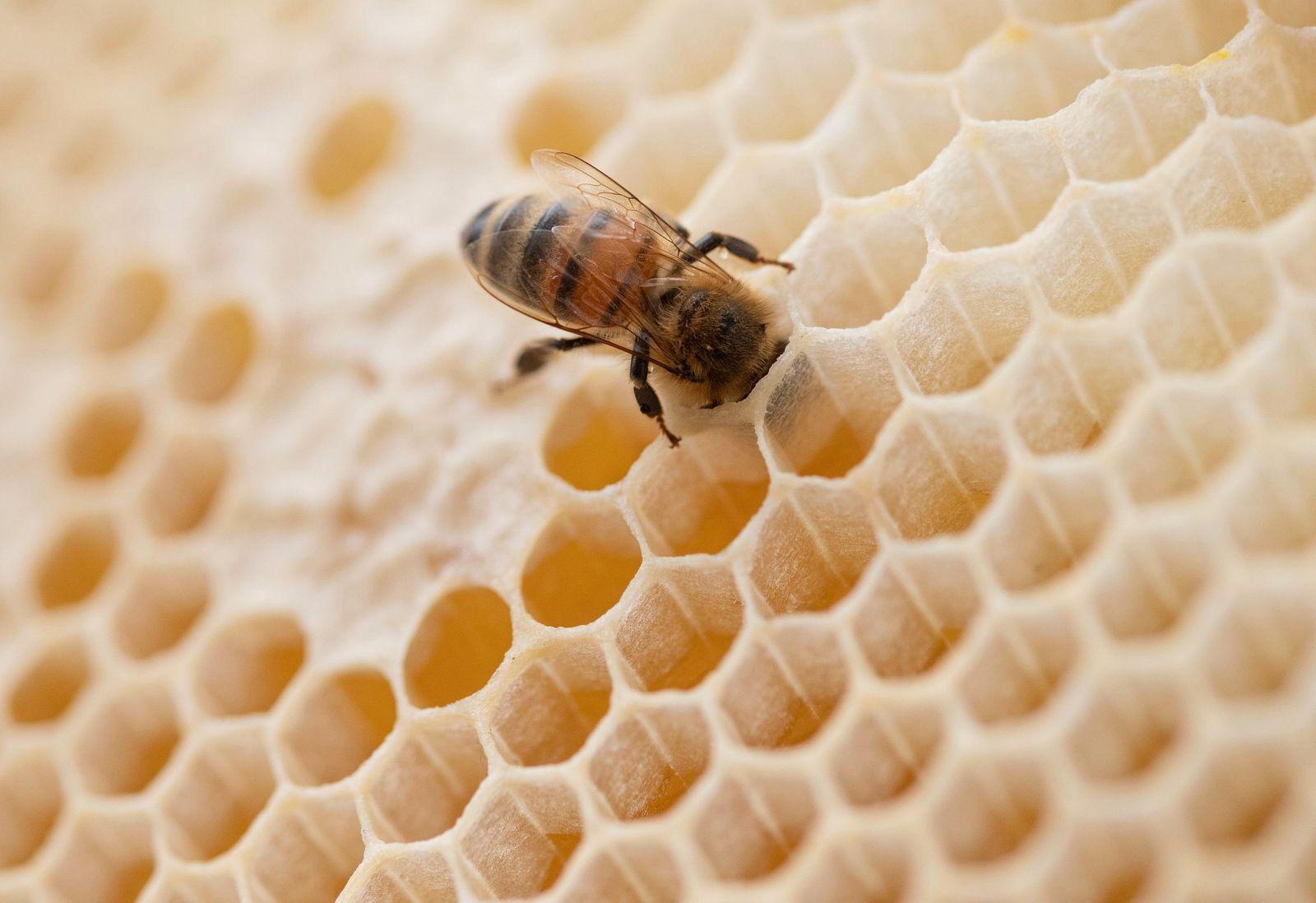 Honigernte in Hessen so schlecht wie lange nicht
