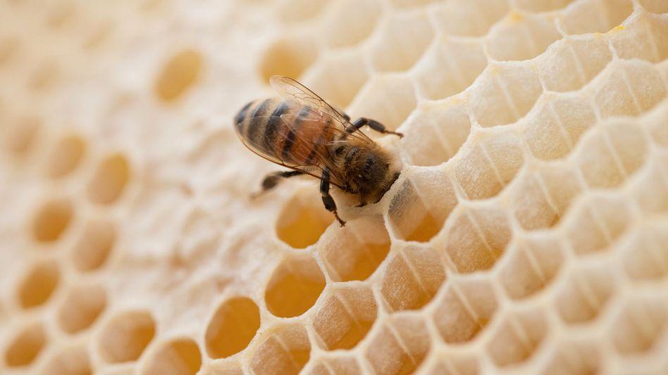 Nicht nur Honigbienen haben es schwer – vor allem den Wildbienen und anderen Insekten geht es schlecht