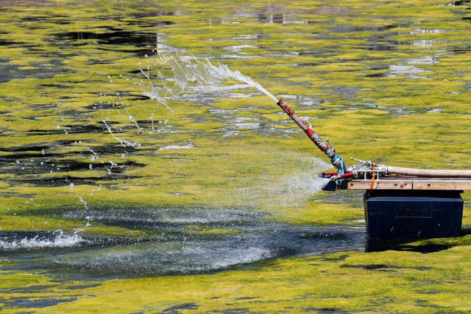 Wasserpflanzen wuchern im Hafenbecken