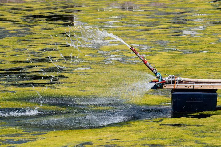 Wasser wird durch einen Feuerwehrschlauch in das Hafenbecken geleitet