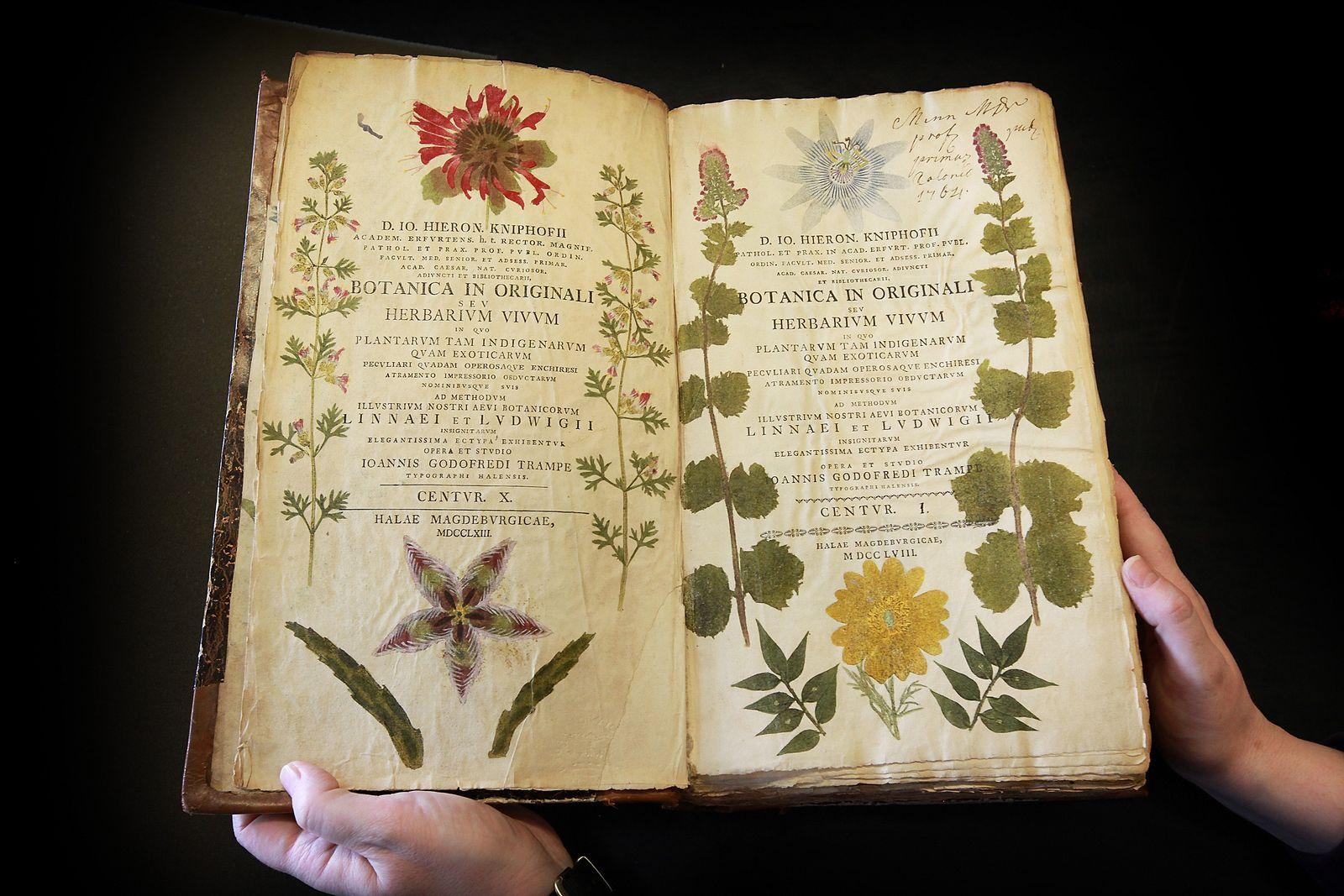Herbarium Kniphofii / Pflanzenbuch