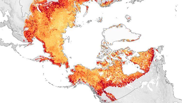 Jährliche Winter-CO2-Emissionen aus dem arktischen Permafrostboden von 2003 bis 2017: Wissenschaftler schätzen, dass der Permafrost mehr Kohlenstoff speichert, als bislang vom Menschen durch die Verbrennung fossiler Brennstoffe freigesetzt wurde