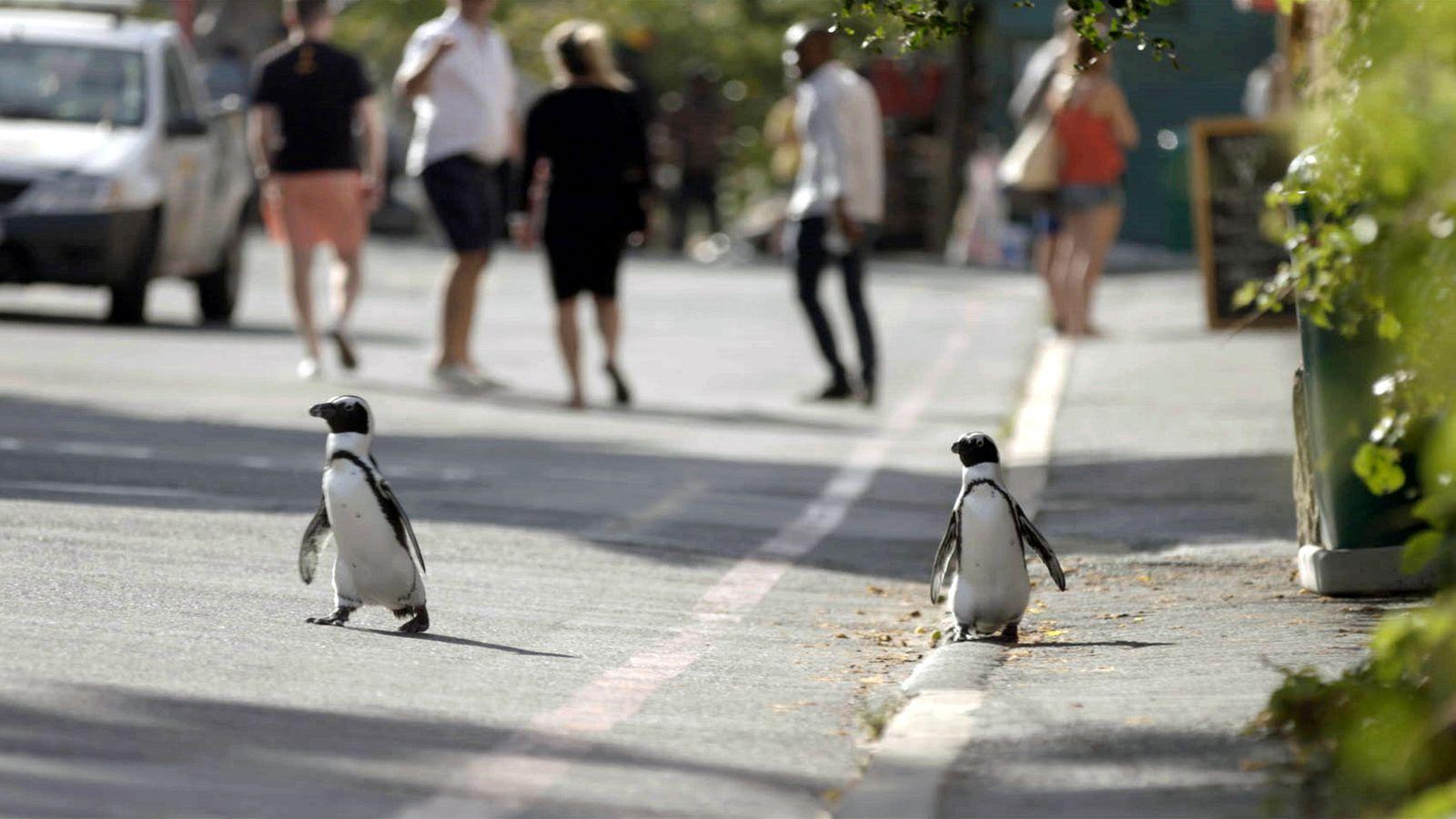 Penguin_Town_014