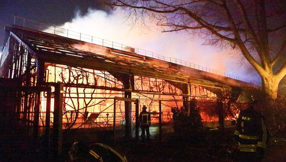 Unglück in der Silvesternacht: Brand im Affenhaus des Krefelder Zoos