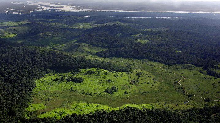 Illegale Rodung: Das Sterben das Amazonaswalds