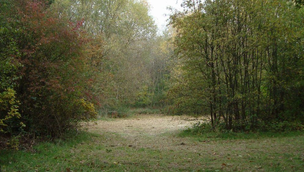 Löhner Wiese: Teure Provinzposse