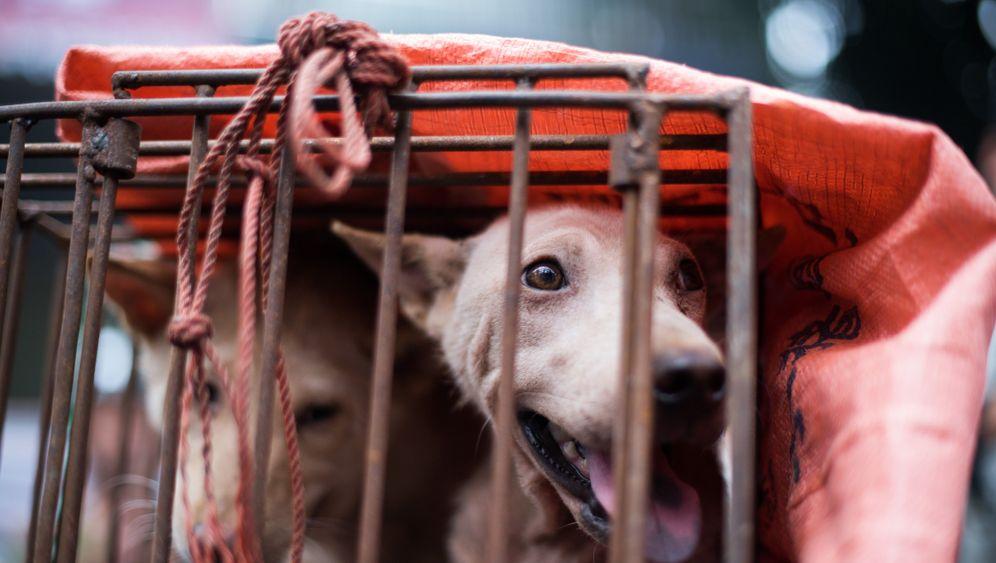 Chinesisches Hundefleisch-Festival: Gequält, erschlagen, an Haken gehängt