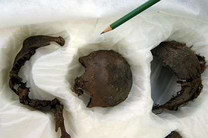 Parts of the skeleton from the new find in the Uchte Moor.