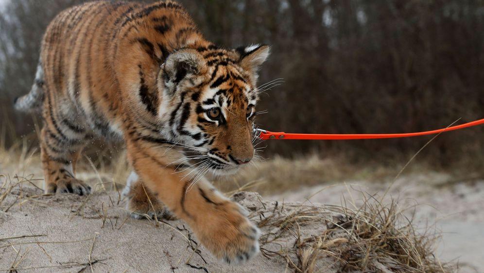 Tigerbaby: Elsas Welt