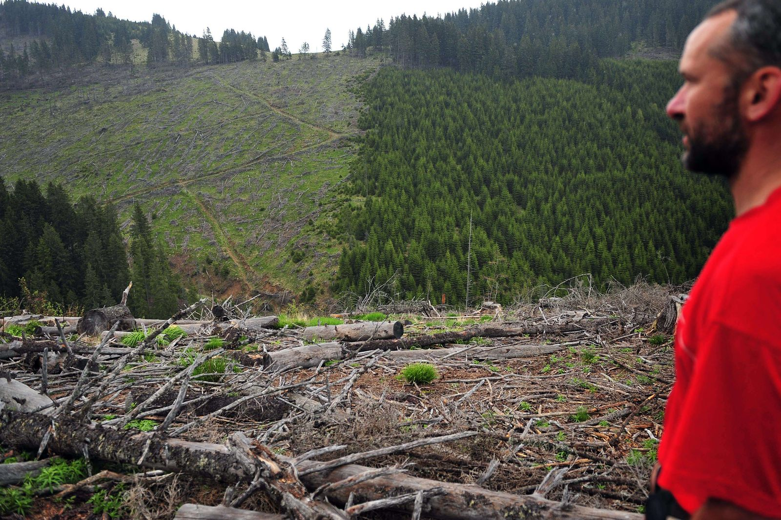ROMANIA-BALKANS-EEUROPE-FOREST-ENVIRONMENT-FILES