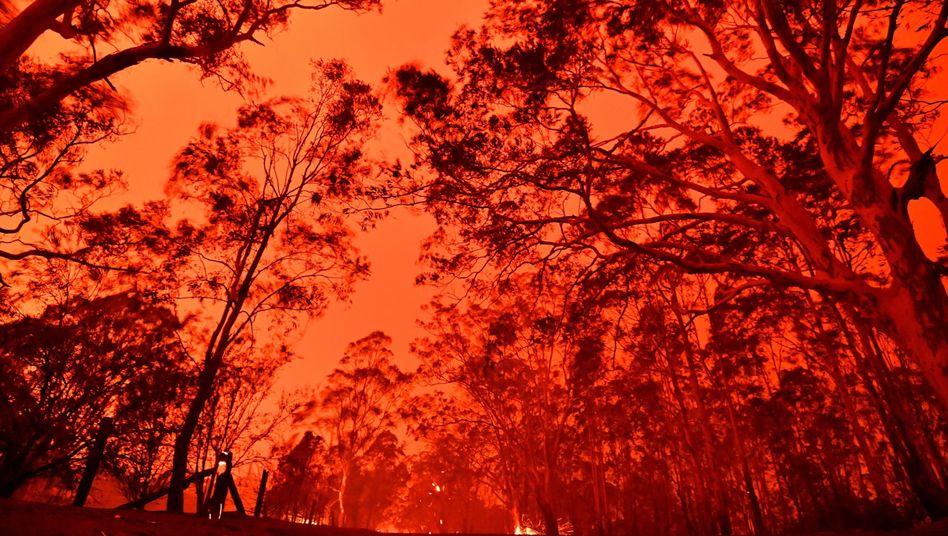 """Der Himmel um Nowra in NSW Ende Dezember: """"Die Feuer brennen immer noch, und sie werden noch über Monate brennen"""", sagte Premier Morrison"""