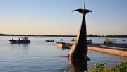 Kadaver eines Buckelwals vor Montreal geborgen