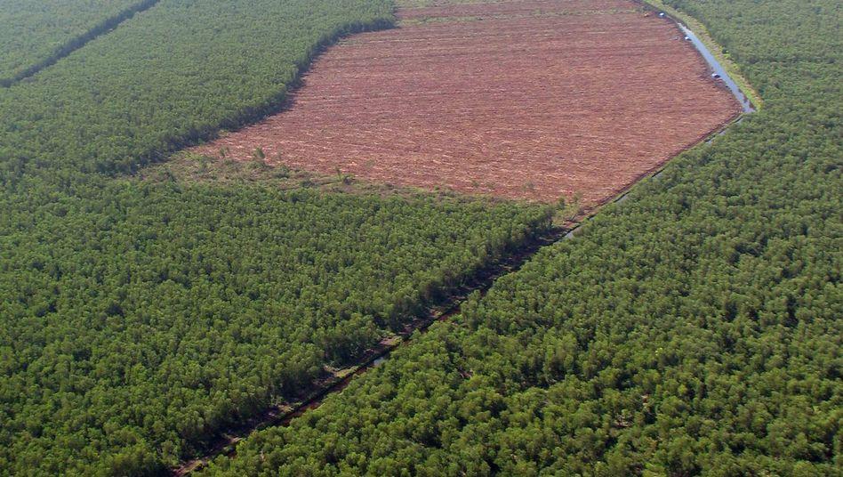 Waldverlust auf Sumatra in Indonesien (Archivbild)