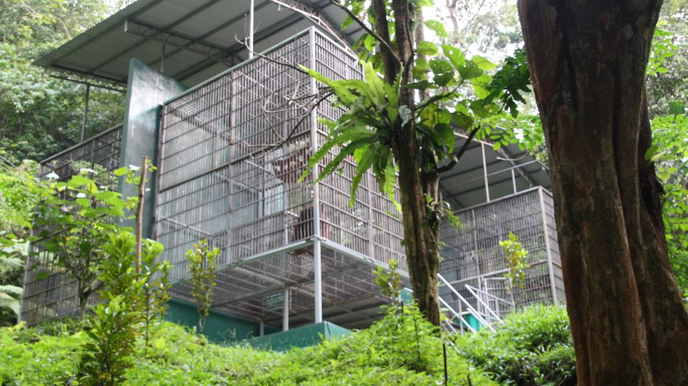 Orang-Utan-Projekt: Going wild auf Sumatra
