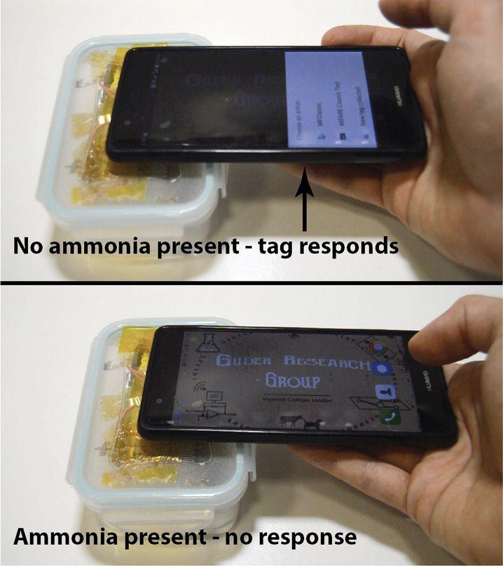 Findet der Sensor Ammoniak, gibt die App keine Verzehrempfehlung