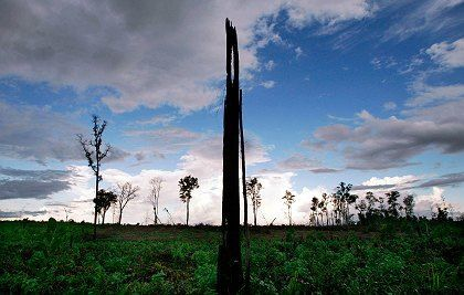 Für Palmöl-Plantagen abgebrannter Regenwald in Indonesien: Streit um neues Öko-Siegel