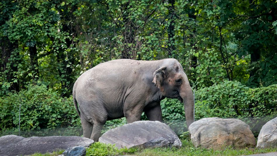 Elefantendame Happy: Sollten Tiergrundrechte wirklich eingeführt werden, was hieße das?