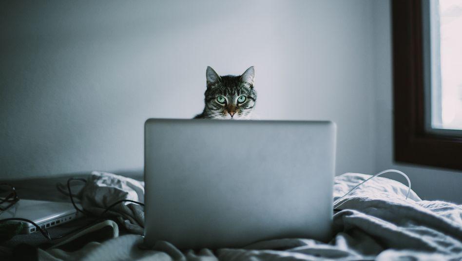 Im Homeoffice sind Studierende auf sich allein gestellt –außer vielleicht, sie haben eine Katze