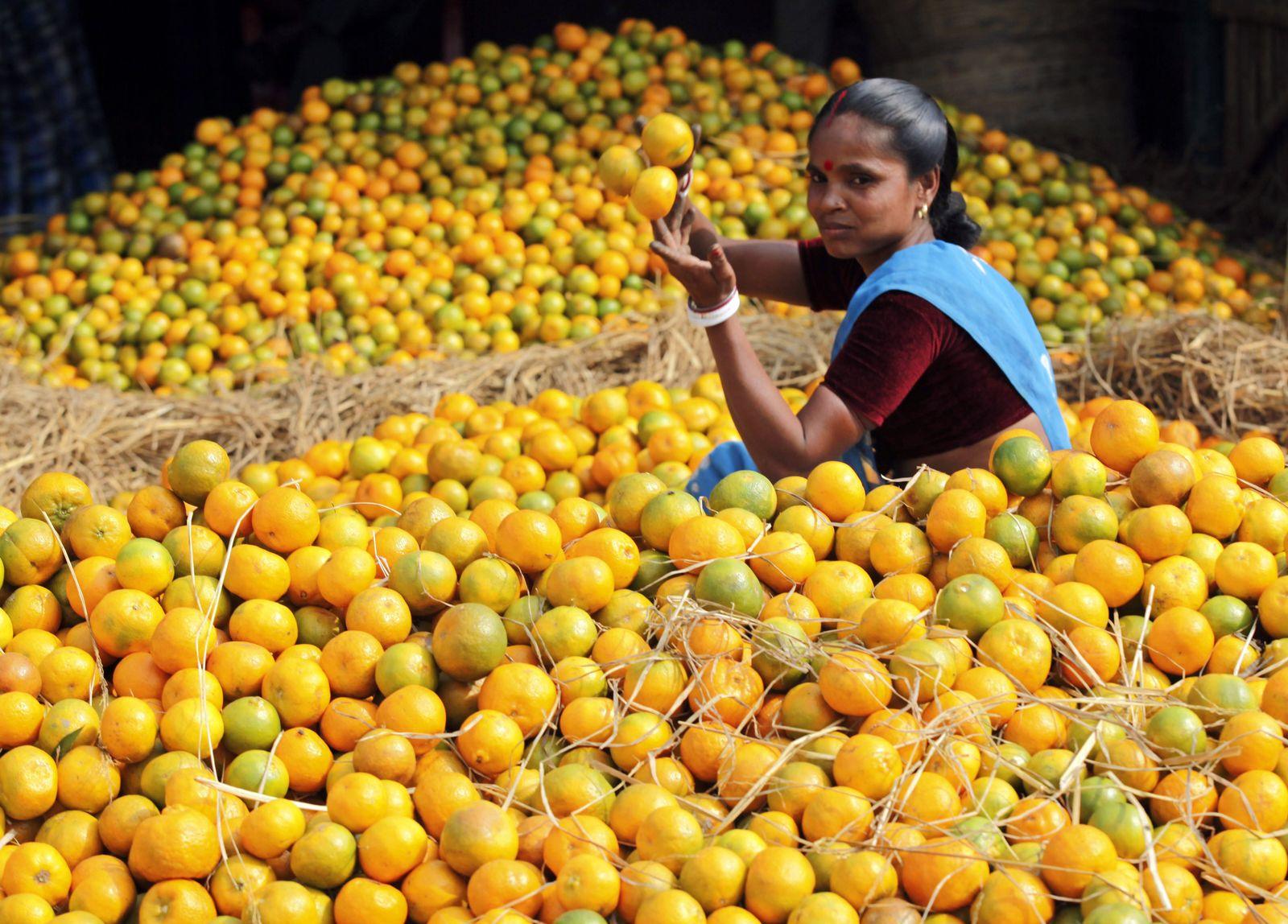 Indien Wirtschaft / Markt in Ahmedabad / Gemüse / Obst / Nahrungsmittel / Lebensmittel / Inflation