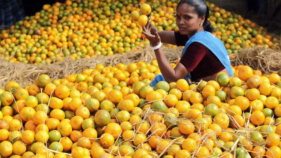 Obstmarkt in Indien: Häufig falsche Lagerung und Transportbedingungen